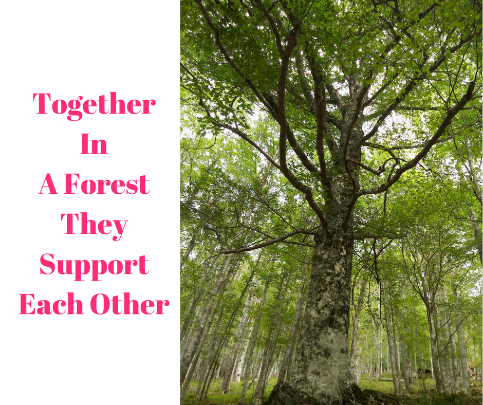 together in a forest they support each other
